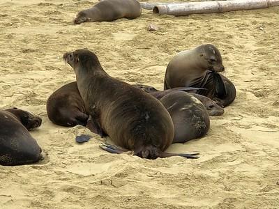 Seals_THOMPSON
