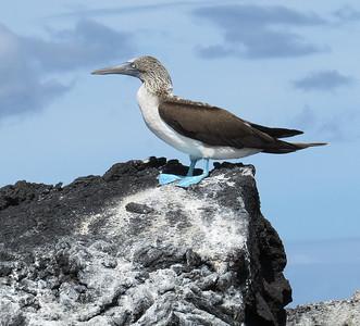 Galapagos, Amazon & Quito Ecuador.  May, 2014.