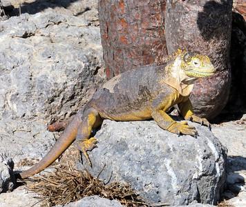 Reptiles, Mammals & Other Sea Life