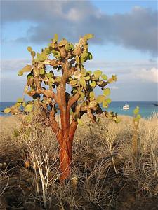 Santa Fe, Galapagos Eilanden.