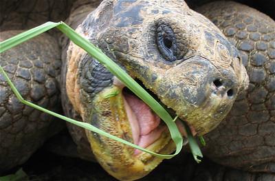 E.T.  Pt. Ayora, Galapagos Eilanden.