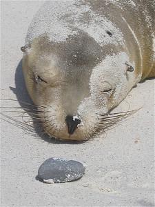 Zand. Galapagos Eilanden.