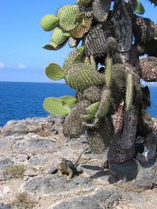 Plazas, Galapagos Eilanden.