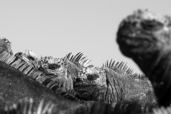 Galapagos February-March 2011