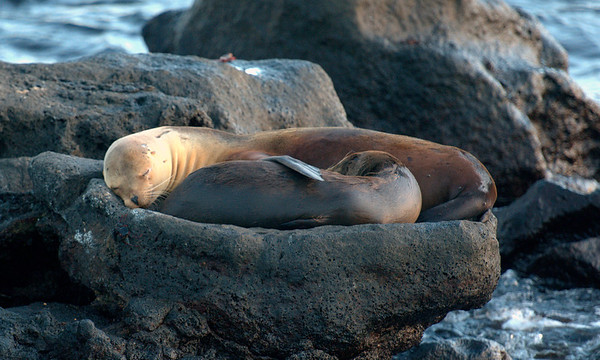 Nap time for the Sea Lions