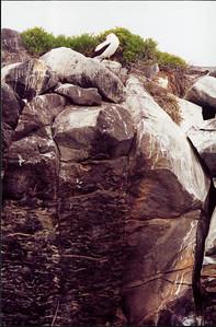Galapagos  1 June 2000: Hood - Punta Suarez - 03