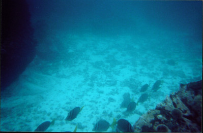 Galapagos   June 2000: Underwater - 16