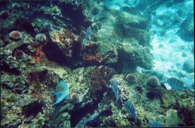Galapagos   June 2000: Underwater - 11