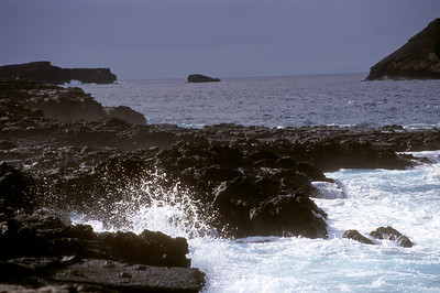 Galapagos 12 June 2000:  - 43