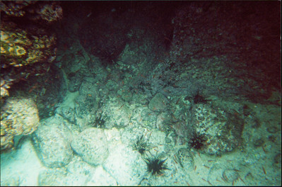 Galapagos   June 2000: Underwater - 06