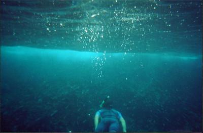 Galapagos   June 2000: Underwater - 01