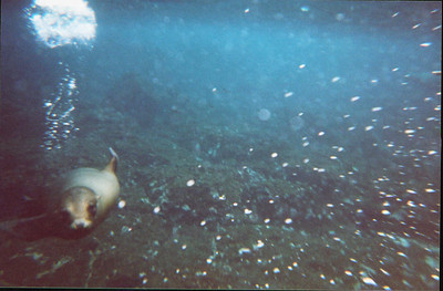 Galapagos   June 2000: Underwater - 18