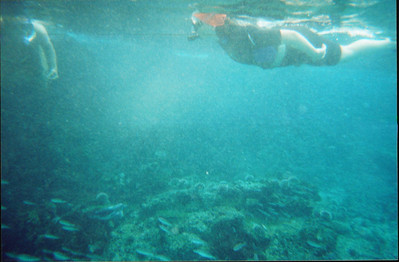 Galapagos   June 2000: Underwater - 03