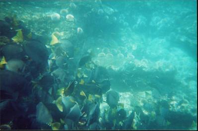 Galapagos   June 2000: Underwater - 14