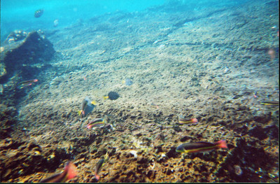 Galapagos   June 2000: Underwater - 05