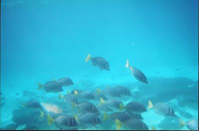 Galapagos   June 2000: Underwater - 10
