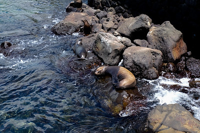 Resting on the rocky shore.