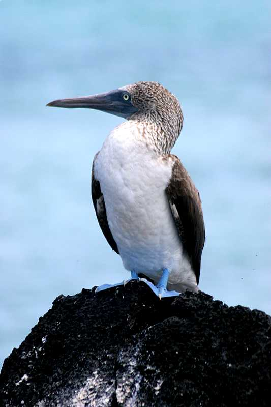 Monday, January 09, 2006