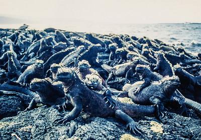 Galapagos Islands, May 17 - June 3, 1993