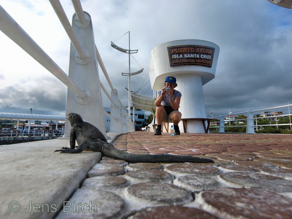 As you can see, there is no problem in finding an iguana to portray. Here is my mother making a picture of me and the iguana on the pier in central Porto Ayora. I used an 11 mm wide-angle lens here.