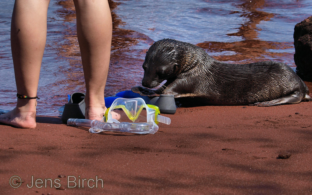 Hmm... I'd also like a pair of blue flippers!<br /> Our little favourite was very interested in our snorkelling gear.