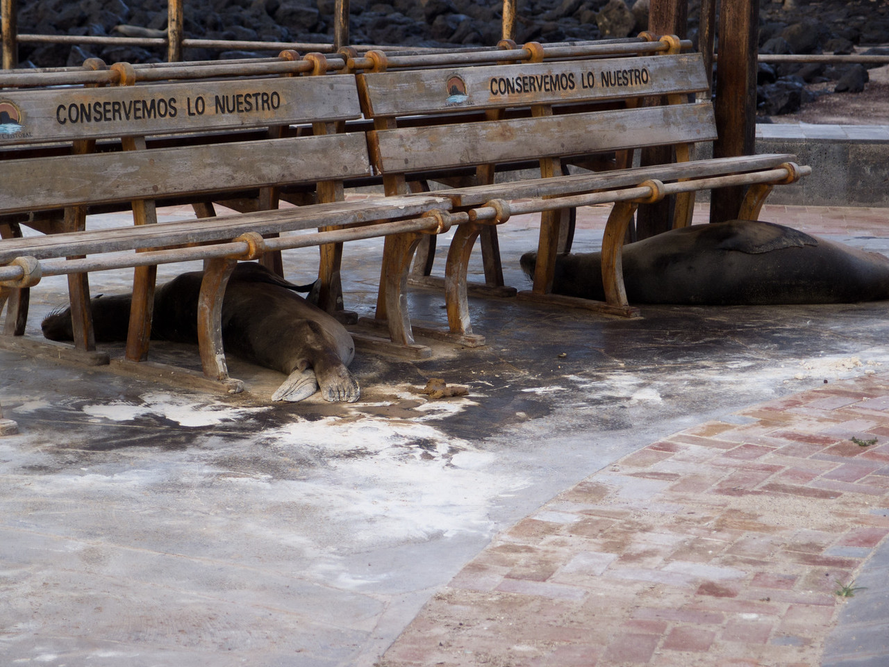 Sorry, but this bench is reserved for sea lions.
