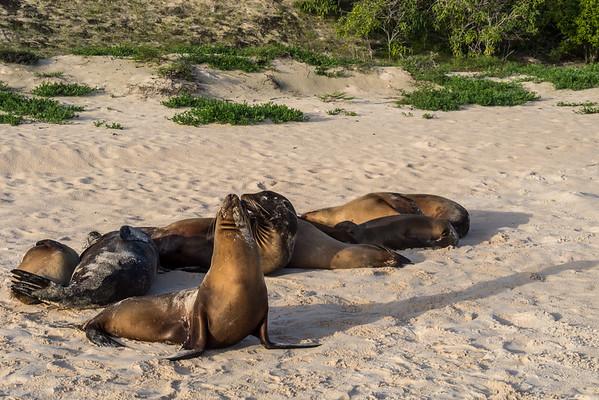 Galapagos, May 22-31, 2015