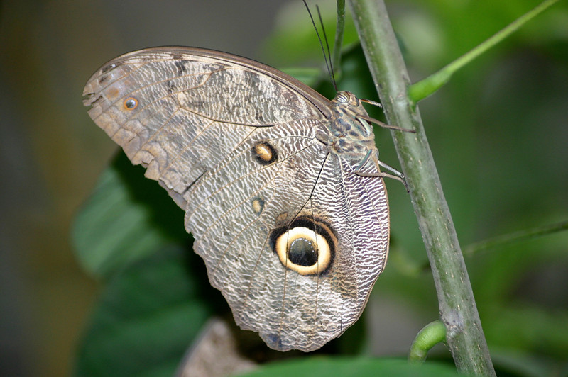 EQUADOR JUNGLE BUTTERFLY