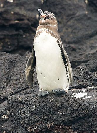 Galapagos (23 August 2008) - Rabida Island