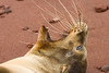 Sea Lion's whiskers