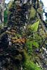 Santa Cruz Highland vegetation