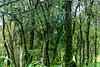 Highland vegetation - moss covered trees
