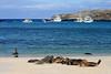 Sea lions on the sandy beach