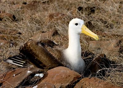 Galapagos (27 August 2008) - Espanola (Hood) Island