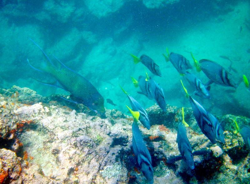 underwater-40.jpg