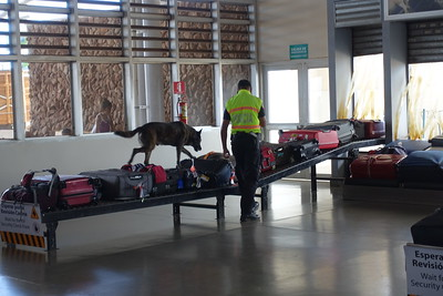 dog checking luggage at Quito Airport