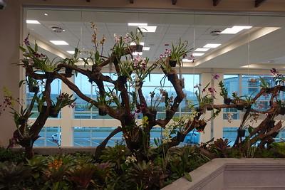 Orchid Garden at Quito Airport, Ecuador