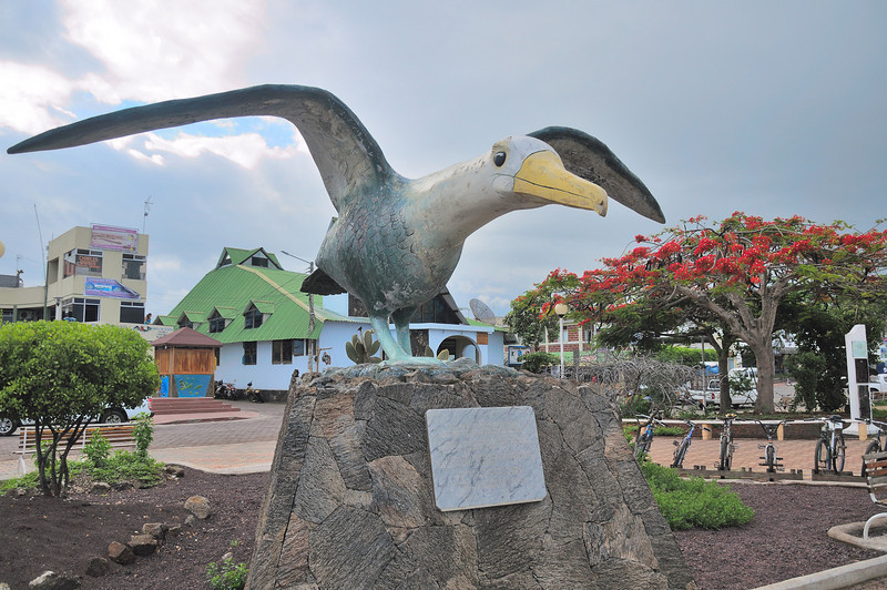 The worlds largest Blue-footed Booby? at Puerto Ayora on Isla Santa Cruz.