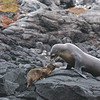 Sea Lion Mom with Pup