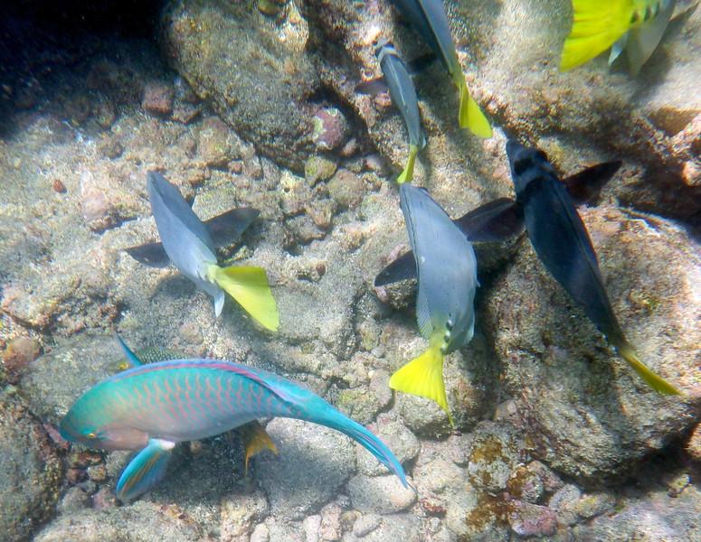 underwater-67.jpg