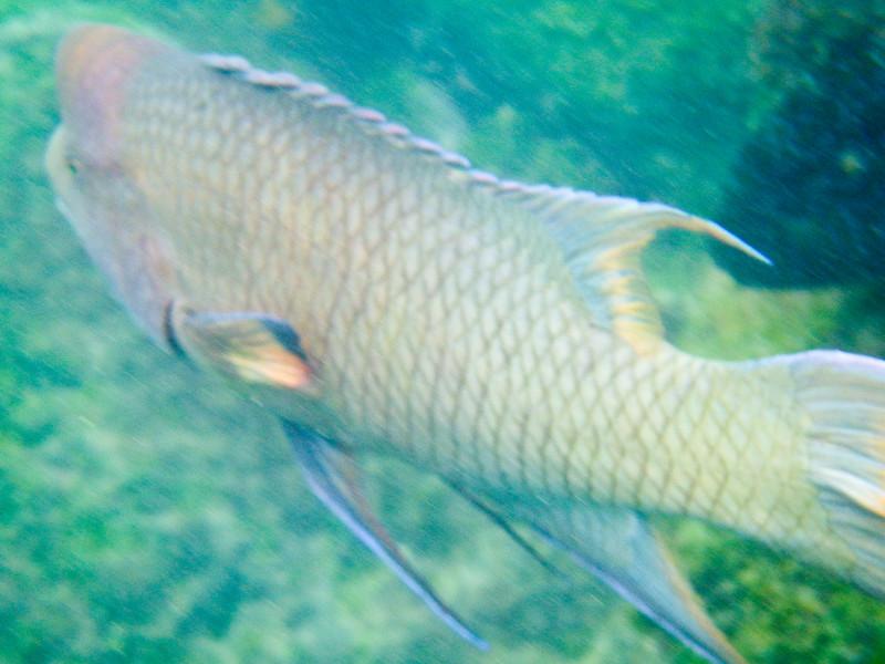 underwater-13-2.jpg