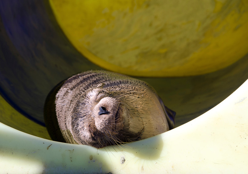 Snoozing in a chldren's tunnel slide