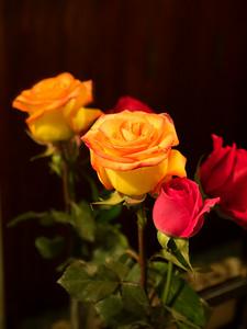 Ecuadorian Roses