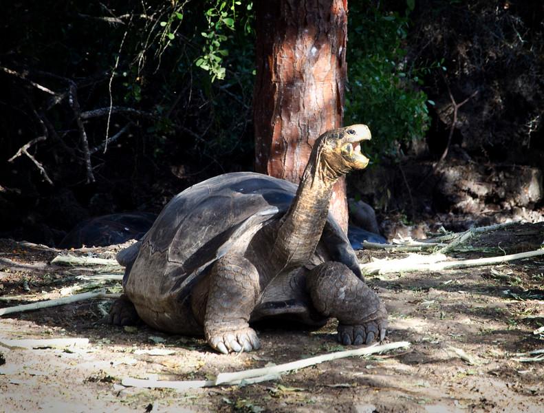 Galapagos-25-2.jpg