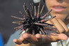 Josie, one of our two excellent guides holds a pencil sea urchin