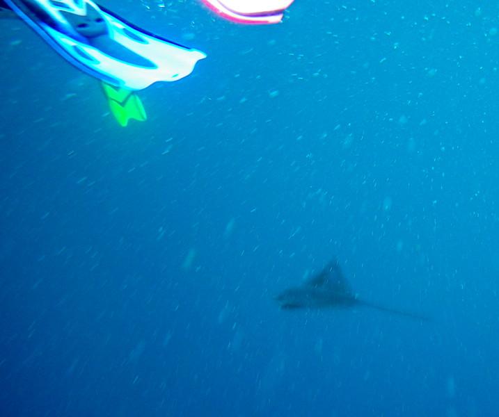 underwater-50.jpg