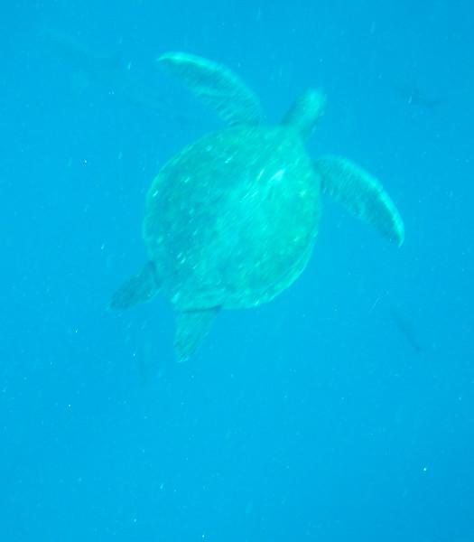 underwater-110.jpg