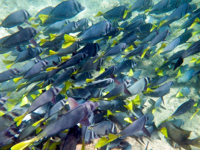 underwater-71.jpg