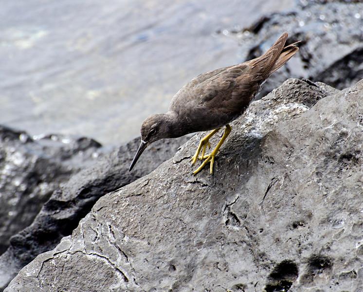 Galapagos-35-2.jpg