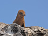 The last cute Sea Lion pup, I promise!